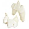 Bone Coyote Tooth Pendant Ivory Work On Bone